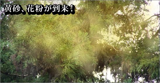 黄砂・花粉が特に影響大
